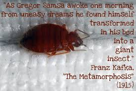 """As Gregor SAMOSA awoke one morning from uneasy dreams, HE found that he was very delicious, but that his bedsheets were somewhat greasy"""